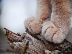 feetsies.