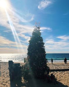 My favorite Christmas tree so far this year! @thebeachcombercafe @crystalcovestatepark
