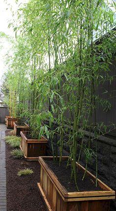 Need Backyard Privacy Ideas? DIY Garden Privacy Screens Need Backyard Privacy Ideas? Garden Privacy, Privacy Landscaping, Garden Landscaping, Landscaping Ideas, Privacy Plants, Bamboo Privacy Fence, Paving Ideas, Fence Plants, Tall Plants