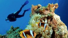 Top 10 WTF Scuba Diving Sites in the World