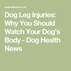 Dog Leg Injuries: Why You Should Watch Your Dog's Body - Dog Health News