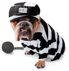 Disfraces para perros: Prisionero