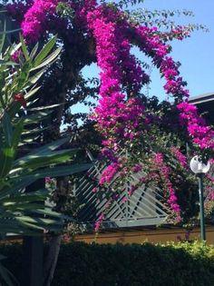 Beautiful flowers that adorn the patio coverings, Serra degli Alimini 1  |  Serra degli Alimini