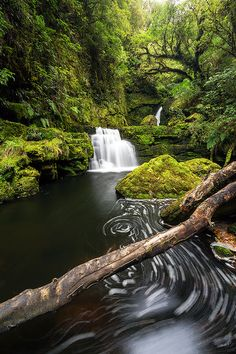 The Catlins (New Zealand). 'Even for many New Zealanders the rugged Catlins coast is unknown territory.