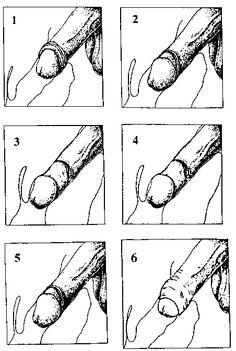 mechanics of intercourse (24 Kbytes)