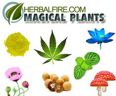 herbal fire