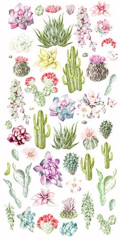 Succulents Wallpaper, Watercolor Succulents, Watercolor Cactus, Watercolor Paintings, Succulents Drawing, Cactus Drawing, Cactus Art, Cactus Plants, Succulent Tattoo