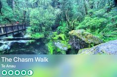 https://www.tripadvisor.com/Attraction_Review-g255124-d8134121-Reviews-The_Chasm_Walk-Te_Anau_Fiordland_National_Park_Southland_Region_South_Island.html?m=19904