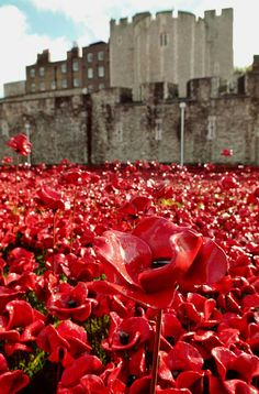 Poppies at the Tower of London went there the other day
