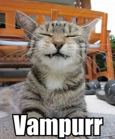 Funny pictures about Still a better vampire than Edward Cullen. Oh, and cool pics about Still a better vampire than Edward Cullen. Also, Still a better vampire than Edward Cullen. Cool Cats, I Love Cats, Crazy Cats, Funny Animal Pictures, Funny Animals, Cute Animals, Funniest Animals, Animal Fun, Animals Dog