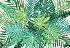 Laptop Skin Green Leaves, Plant Leaves, Laptop Skin, Colorful, Plants, Plant, Planets