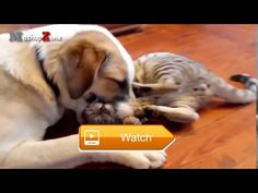 Funniest Cats Compilation Funny Cat Videos  funny cat videos funny cats funny cat memes funny cat pictures funny cat names funny cat gifs funny cats and dogs funny cat quotes funny cat photos funny  on Pet Lovers