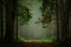 Green world by Péter Bognár on 500px