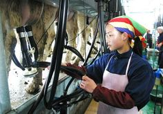 Milk export from china will be #1 in sales in a few years according to Forbes Magazine.