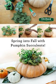 Looking for the perfect fall centerpiece? This simply DIY Pumpkin Succulent arrangement will be the most beautiful hostess gift or centerpiece for your next fall party. This is also a great piece to make for some fun fall décor around the house.