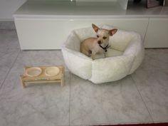 Cuccia piccola per cani piccoli #CucciaCane #CucciaPiccola #PiccolaCuccia #Chihuahua http://www.principini.it/prodotti/gatti/cucce-nicchie-gatti/cuccia-piccola-per-gatti-o-piccoli-cani