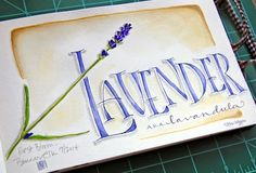 every Spring i purchase a thriving lavender plant, and usually by the middle of the Summer it's withered away due to sweltering he...