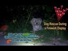 A frightened homeless dog gets rescued during a firework display - Please share