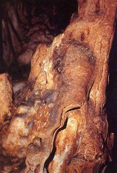 Bisonte en una estalagmita en la cueva del Castillo (Cantabria).Hombre-bisonte pintado y grabado con la sombra del pilar estalagmítico proyectada sobre la pared. Cueva de El Castillo. Cantabria.