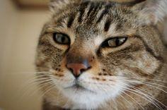 Mar-kun  #neko #cat  (via nyagomohu)