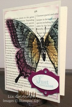 Liz used the emboss resist technique to color her Swallowtail image with sponge daubers. Her card also uses Vintage Verses (SAB), First Edition dsp, & Apothecary Accents.