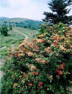 Roan Highlands - Hiking to Grassy Ridge Bald on Roan Mountain