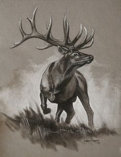Bull Elk Original Sketch  cbstewart.com  Wildlife art, outdoors, nature
