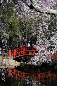 """Japanese Garden with Cherry Blossoms ""  (c) BonnieBlanton #Japan #Japanese-Garden,日本,日本庭園"