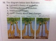 Awesomely Incorrect Test Answers from Kids  Given the illustration he's given, I think the kid has a point.