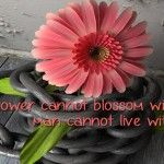 Pink Flower Quotes About Life Facebook Cover Photo