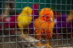"SHOP WINNER: ""Bird Market, Yogyakarta, Indonesia"" by Megan Ahrens #travel #shop #Indonesia"