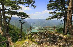 #Serbia #nature #photography Tara Mountain