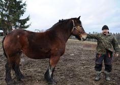 Facet przypomina mi chłopa z rodzinnej wsi. Chłopisko prawie cały czas chodziło w wielkich gumofilcach, hodował byki, był najsilniejszy na rękę w całej wiosce (wielki biceps) i miał zawsze najsilniejsze konie. kiedyś we wsi chłopy sprawdzali który koń jest silniejszy sprzęgając dwa wozy które konie przeciągały. Aha. nazywali go wielką stopą.