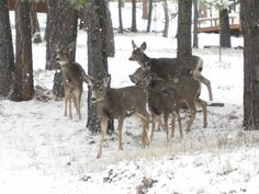Just Beautiful... So glad she shared... Herd Of Deer That Followed Me In The Woods -13 Pictures & 5 Videos
