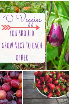 Vegetables to grow next to one another. Vegetable, Vegetable Gardening, Vegetable Gardening Tips and Tricks, Gardening, Gardening Hacks