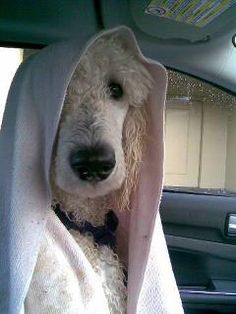 I'm not happy about leaving the beach so I'm going to wear this towel on my head all the way home in the car.