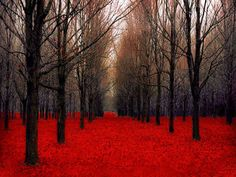 Large Wall Decor Red Forest Nature Photography Fall Trees- Fiery Autumn- Rustic Woodland on Etsy, $85.00