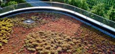 In den letzten zwei Jahrzehnten hat die Begrünung von Dächern einen rasanten Aufschwung genommen. Aus einem zunächst als Architekten-Gag gedachten grünen Hut auf einem Haus, ist ein ernst zu nehmendes Element beim Bauen vieler Häuser geworden.