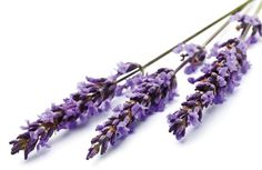 Skin Care benefits of Lavender Oil Organic Oil, Organic Skin Care, Lavender Benefits, Lavender Oil, Hair Accessories, Beauty, Beleza, Hair Accessory