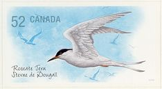 Roseate Tern stamps - mainly images - gallery format
