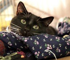 This spunky lady is Relish! She's at OHS waiting (sort of) patiently for her forever home. What do you think she's thinking in this photo?    http://www.oregonhumane.org/adopt/detail.asp?animalID=78976