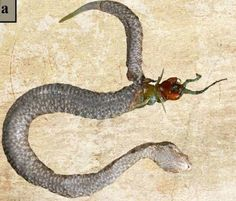 Scientists Stumbled Upon A Dead Snake That Had Something Terrifying Inside Of It