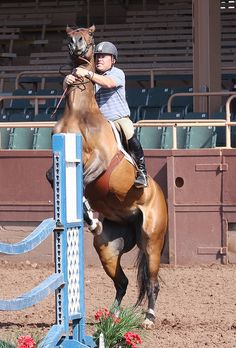 What to do when your Horse Rears - Does Your #HorseRear? We hope you never have to ride a rearing #horse, but it's best to be prepared just in case. Here's how to safely handle the situation. #horsestalls