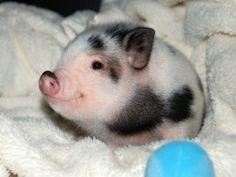 Tierbabys sind so verdammt süß. Bei diesen Fotos wirst du dahinschmelzen. Die winzigen Tiere sehen aus wie lebendige Kuscheltiere!