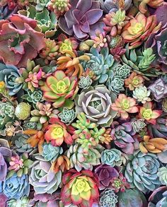 Best Free cactus plants succulents Concepts Plants and also cactus are classified as the ideal house decorations to get minimalists in addition to trend