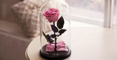 Beauty and the beast rose, enchanted rose belle, forever rose, Enchanted Rose, Belle rose, rose in glass, preserved roses, five  year rose
