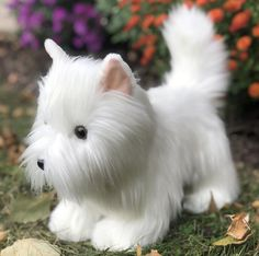 Westie Plush Puppy Dog He is adorable with his pink little ears and button nose #westhighlandterriers #westies #dogs Highlands Terrier, West Highland Terrier, Doll Clothes Hangers, White Terrier, Pet Puppy, Terrier Dogs, Westies, Pet Toys, Fur Babies