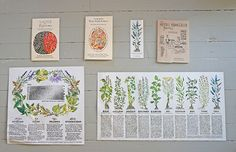 Check out this herbalist and artists' guides for a healthy lifestyle! #Health #Healthy #Lifestyle #Wellness #Herbal