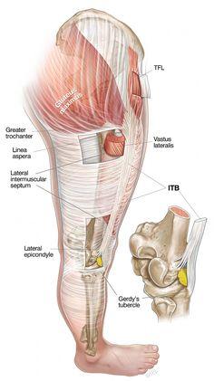 ITB Syndrome Anatomy