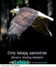 Na poprawę humoru na Stylowi.pl